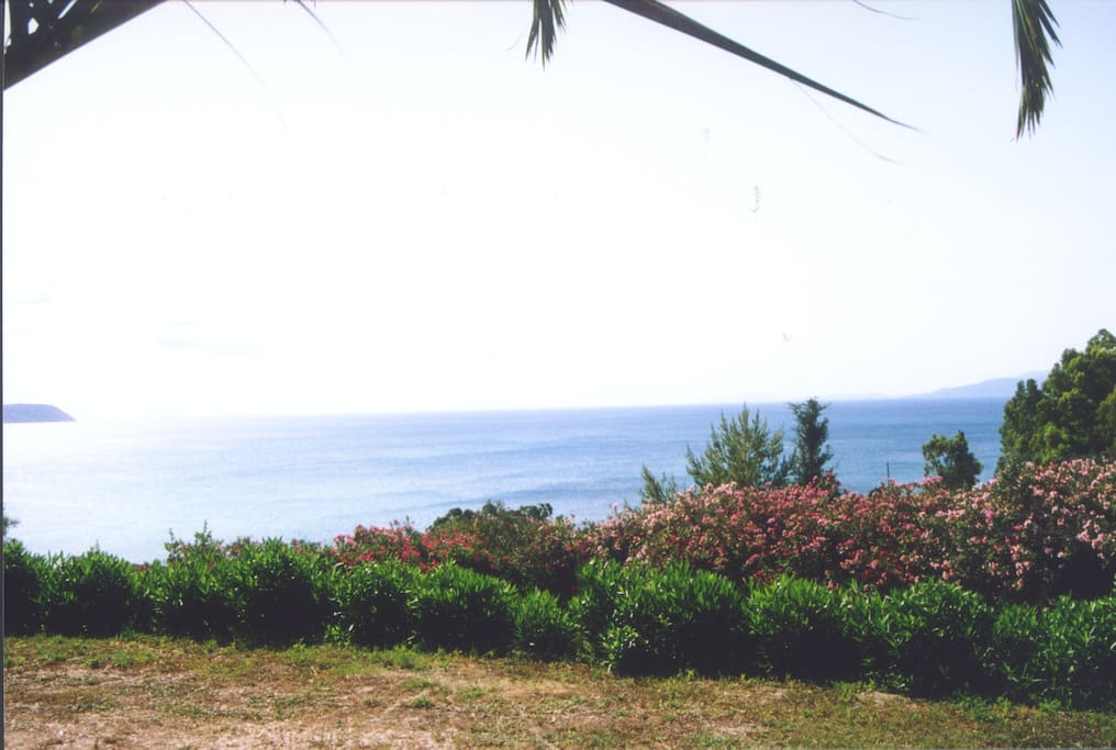 Nerissa apartments sea view