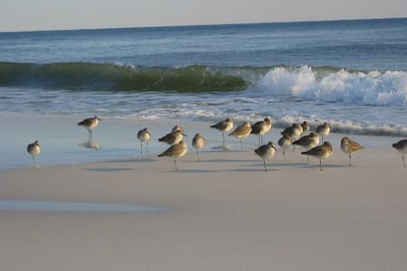 Sleepy Sandpiper - Walk to Beach! - House