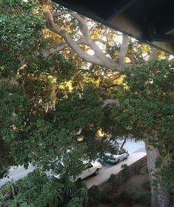 Oceanview Kelp Forest