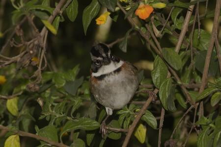 Casa de pájaros en la montaña de Passiflora - Cabin