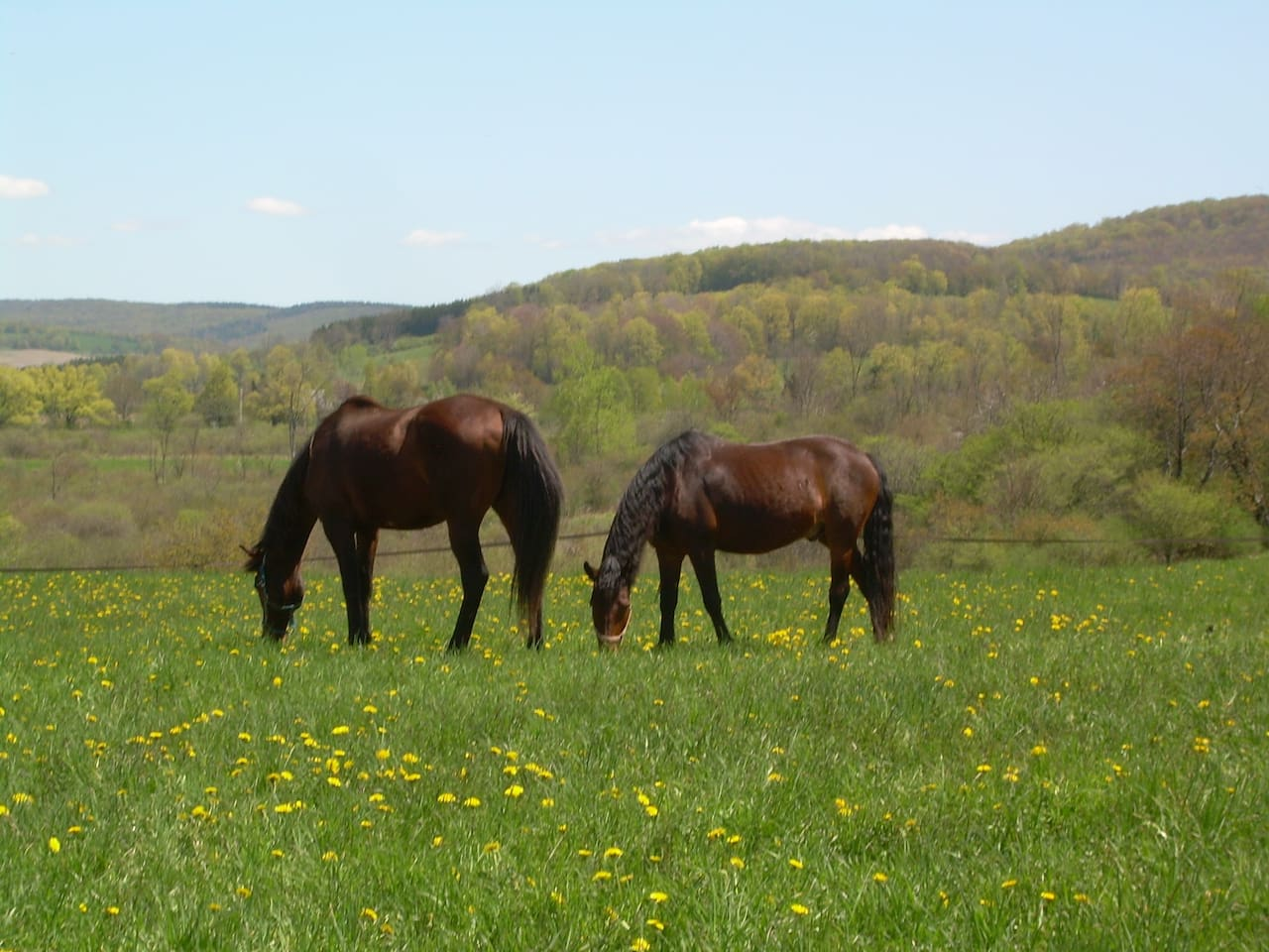 2 of my horses grazing in early May