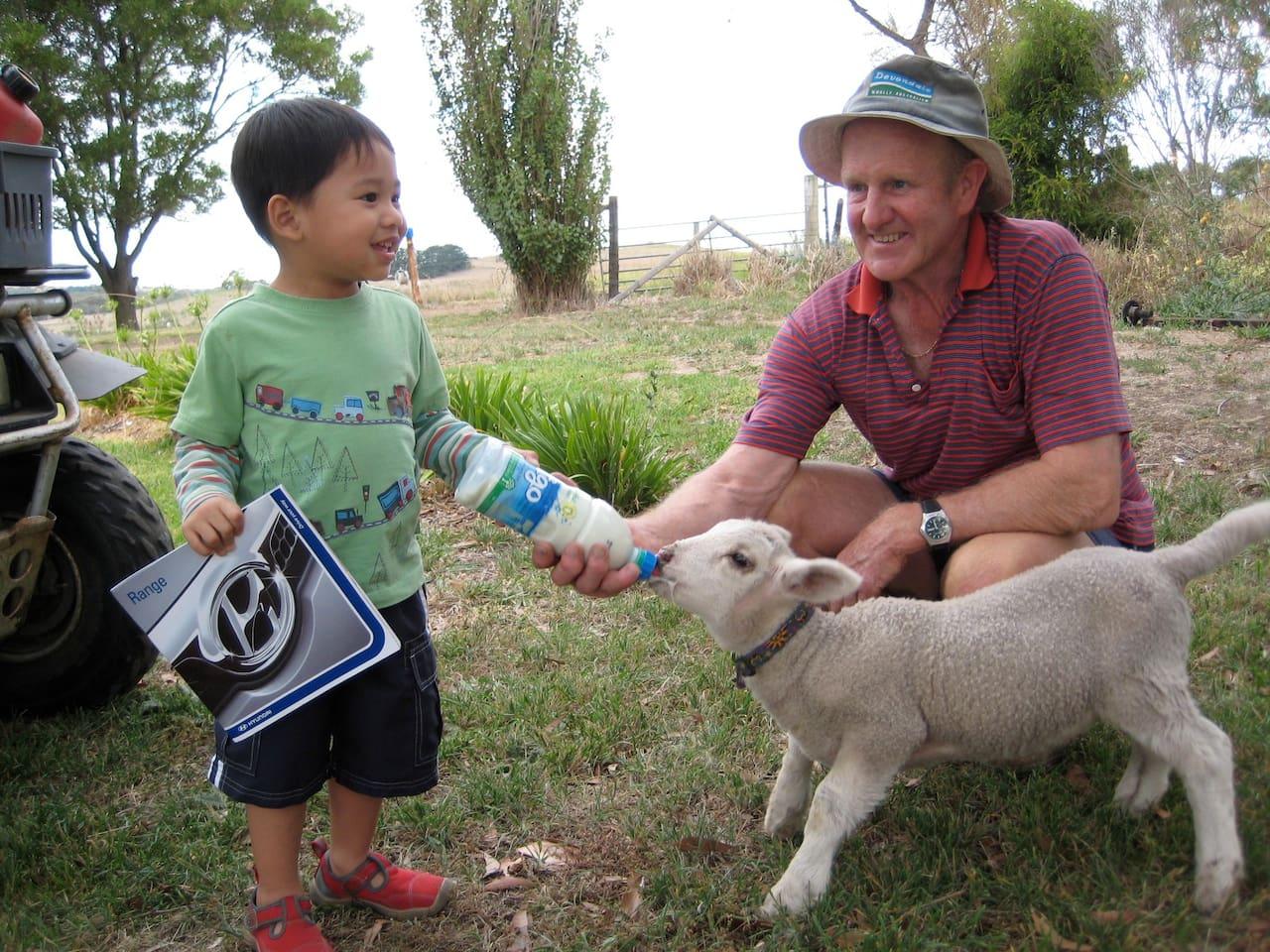 Feeding the lambs with Farmer Warren