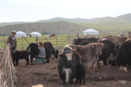 Mongolian nomadic family - Yurt