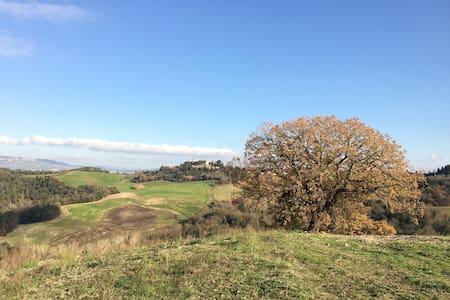 Montegemoli - il Felciaio - Montegemoli