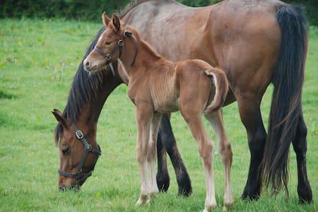 Gîte Campagne - Elevage de chevaux, 10 k de la mer - Ev