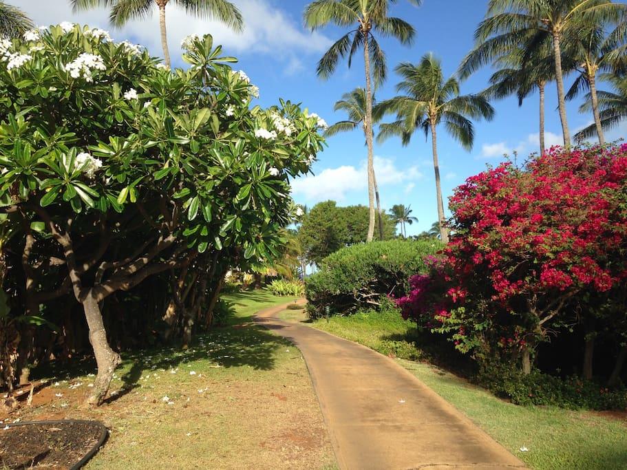 Our beach path to ocean-walk in 5-10 min to Brenneckes Beach
