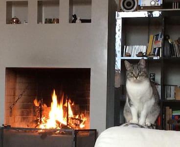 La casina dei gatti - Apartment