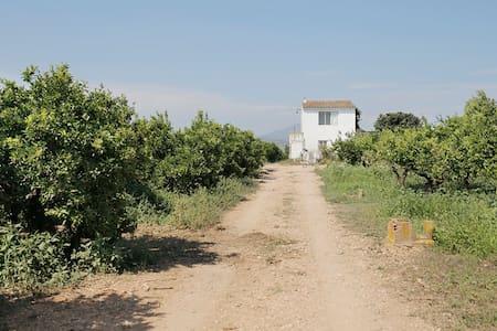 Rural house among orange trees - House