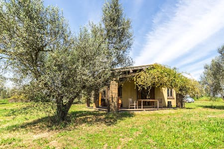Incredible Organic Olive Farm - Tuscania - Apartamento
