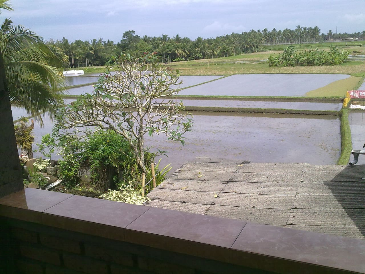 very nice view of rice field and garden from veranda