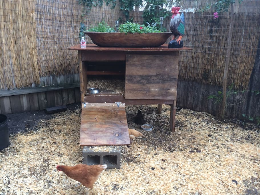 Urban chickens !!! Let us share our fresh eggs with you! Fresh vegetable and herb garden to share as well... Love homegrown tomatoes?? We have them!