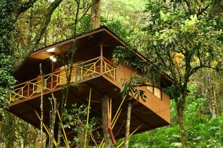 Seven Spring Tree House - Munnar - Domek na drzewie
