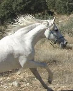 Horsey Holidays in Andalucia Spain! - Íllora - Hytte