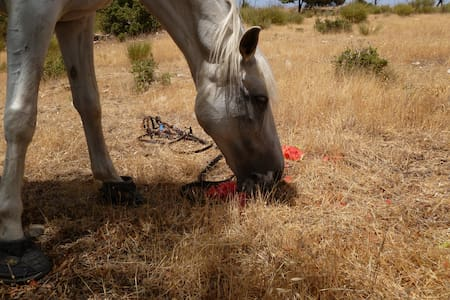 Horsey Holidays in Andalucia Spain! - Chalet