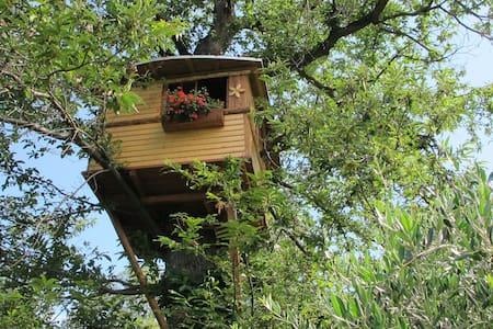 casetta sull'albero tra i castagni - Capo di Ponte