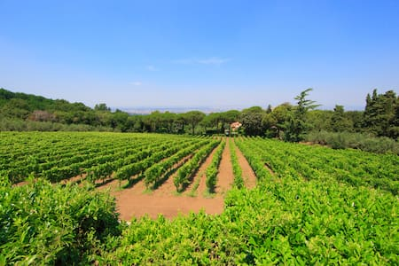 Country Villa Vineyard free wifi n2