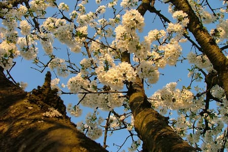 Spring dream in Monferrato - Cavagnolo - Bed & Breakfast