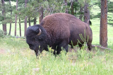 The Bison House! - Casa