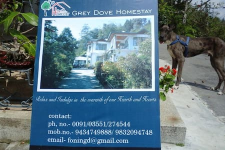 GreyDoveHomestay - Bed & Breakfast
