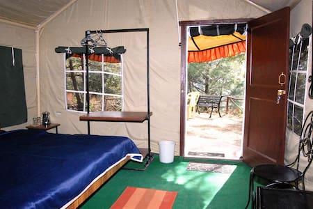 | Swiss tent| Adventure activity with BF/Dinner - Shoghi - Tienda de campaña