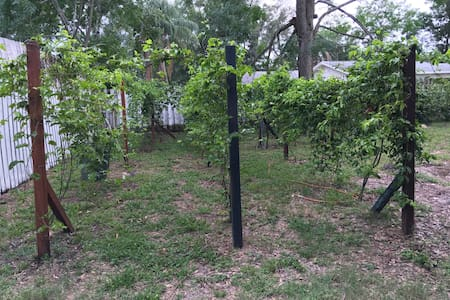 Florida Passion Fruit Vineyard - Orlando - Cabin