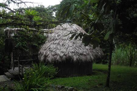 Palmhaus im Regenwald - Punta Arenas - Huis