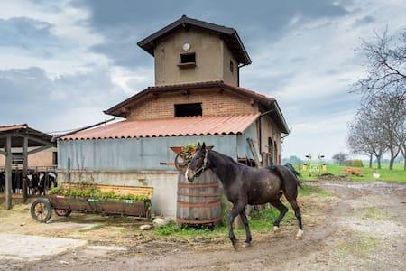 Stanze matrimoniali in fattoria con animali - Basilicanova