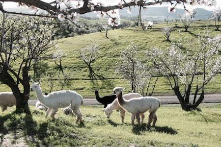 Horse Friendly Alpaca Ranch With Breathtaking View - Paso Robles - Casa