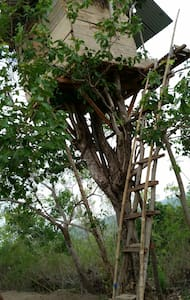 nusa penida trees house