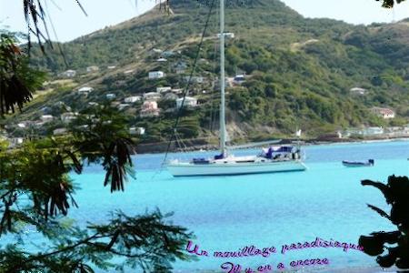 cabine d'hôtes sur un voilier aux Antilles - Le Marin - Boat
