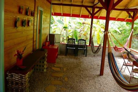 Beyond Vitality Nature Camp - Papaya - Castle Bruce