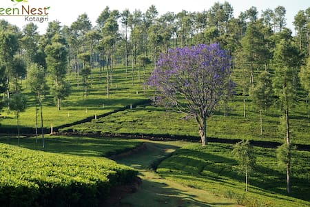Look deep into nature at Green Nest - Kotagiri - Villa