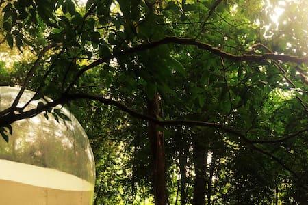The bubble 4 - Telt