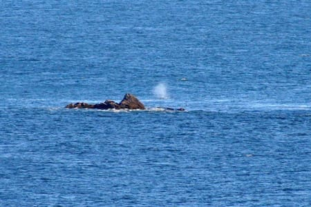 Watch the whales from Rainbow Rock