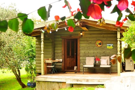 Log Chalet set in Native Bush - Rotoiti Forest