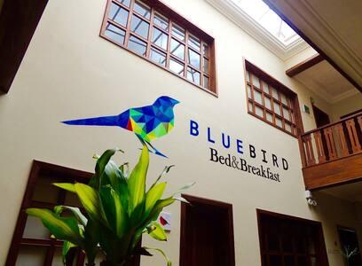 Blue Bird B&B - Cuenca - Bed & Breakfast