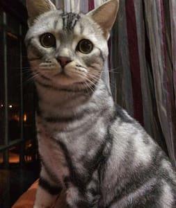 家有萌猫 - Dom
