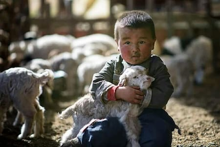 Adventure Tour to the Gobi! - Ulaanbaatar - Camper/RV
