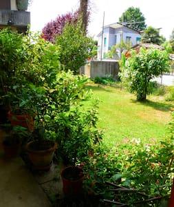 The Lemon Garden - The Black Lemons - House