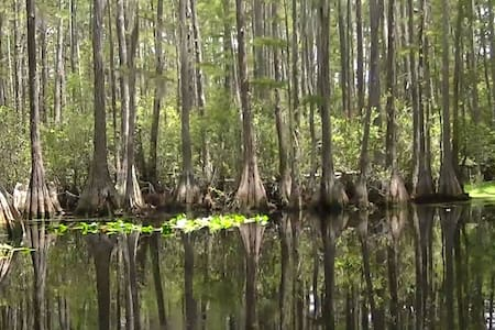Okefenokee Swamp and Suwannee River - House