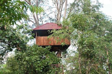 The Monkey Pod Treehouse - Sangkum Thmei