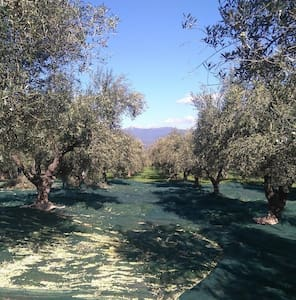 Olive Oil Farm - Huis