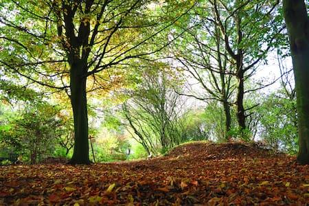 Wild & romantic camping spot under beech trees - Tent