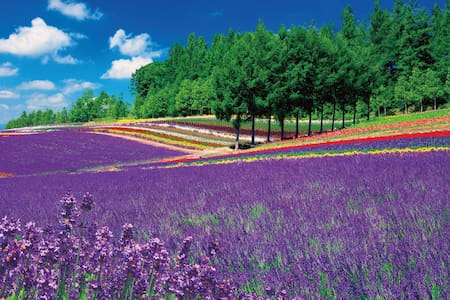Nature, Lavender, simple room and beds - Furano-shi - Condominium