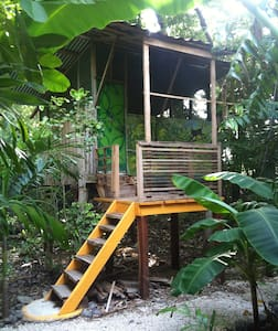 Casa Congo:  live monkey view, sleep in nature. - Cabana en un arbre