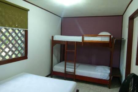 Mixed Dorm Aracari Garden